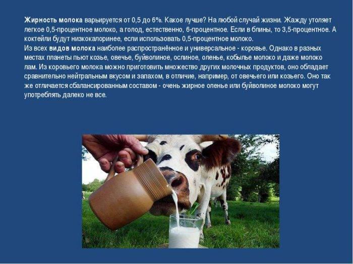 Коровье молоко: состав, польза и вред, калорийность