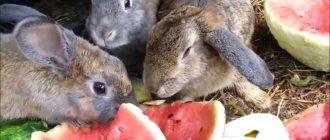 Можно ли кроликам арбузные корки и мякоть