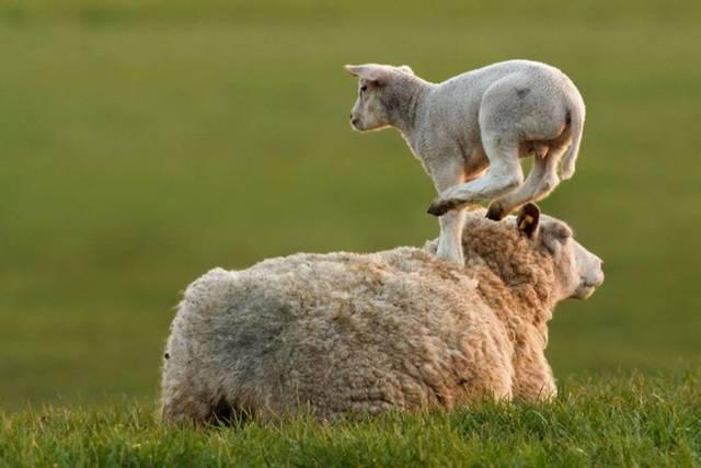 Как называются детеныши животных: называем правильно