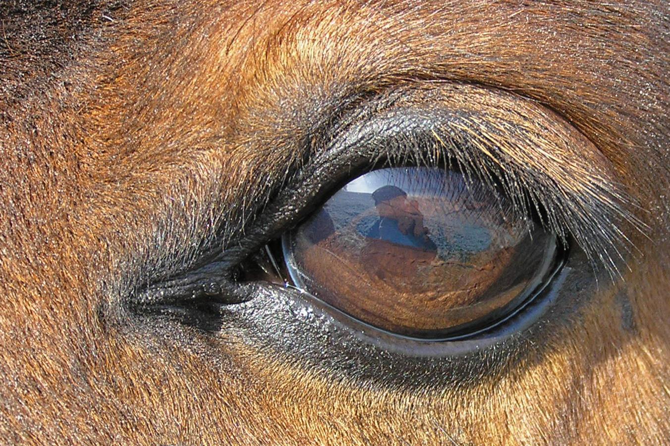Шоры у лошади: предназначение, строение и типы, использование