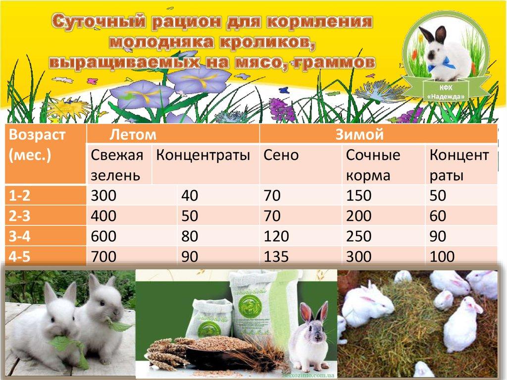 Чем кормить кормящую крольчиху после окрола