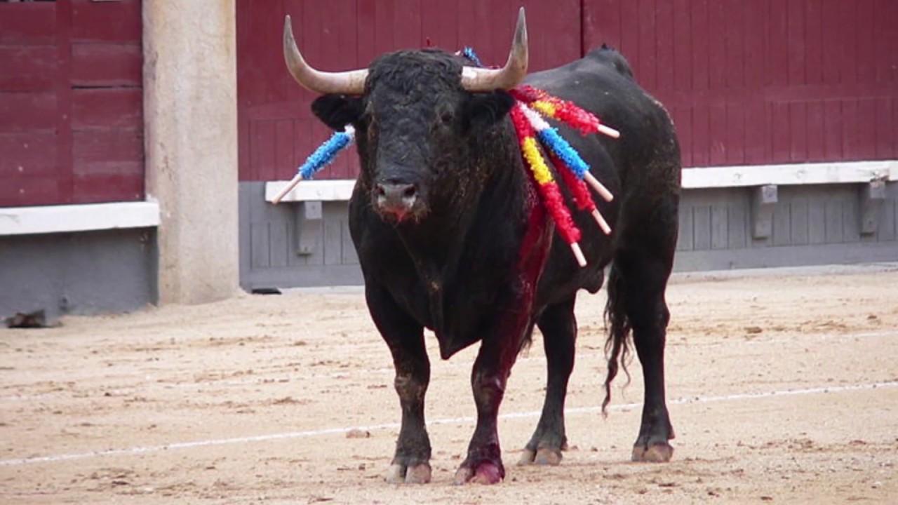 Кастрация быков: за и против!