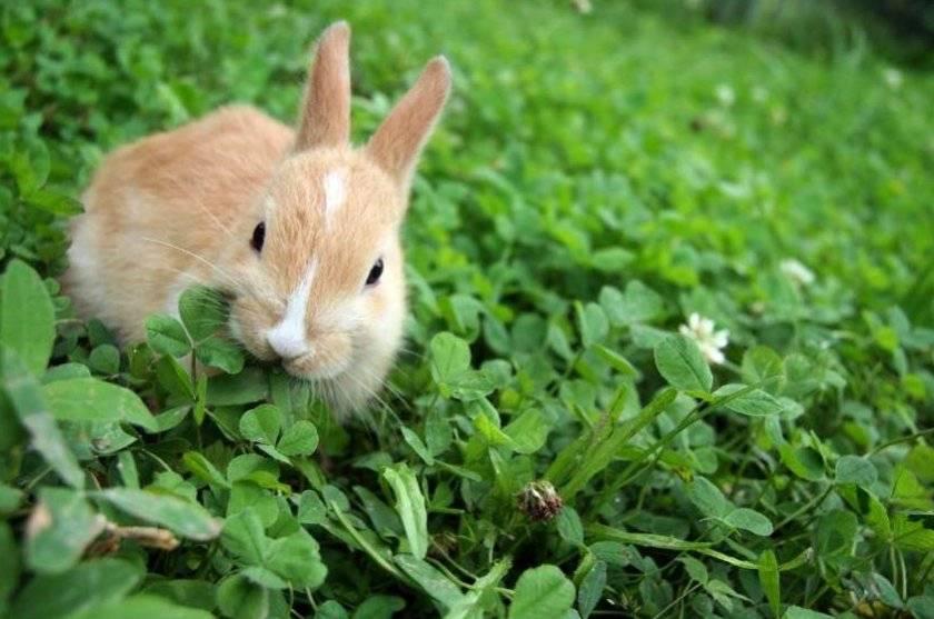 Можно ли кроликам горчицу