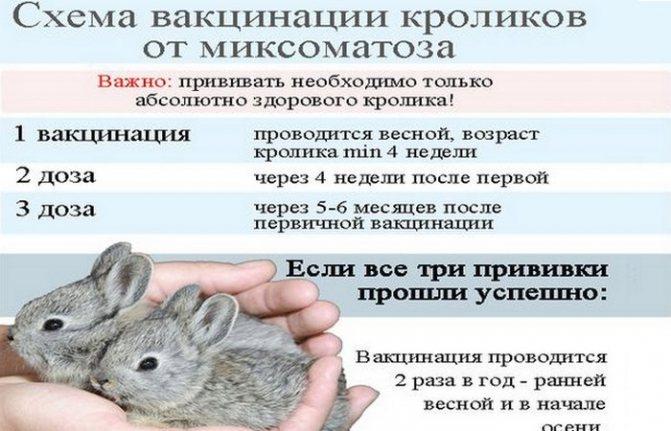 Окрол крольчихи