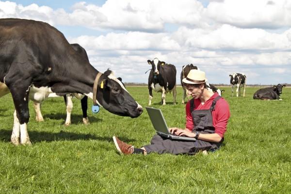 Мини-ферма своими руками: примерный бизнес план, выбор места и подготовка к постройке, обустройство