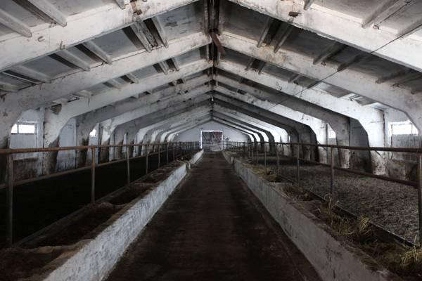 Как построить мини ферму крс: проектирование, технология производства молока |