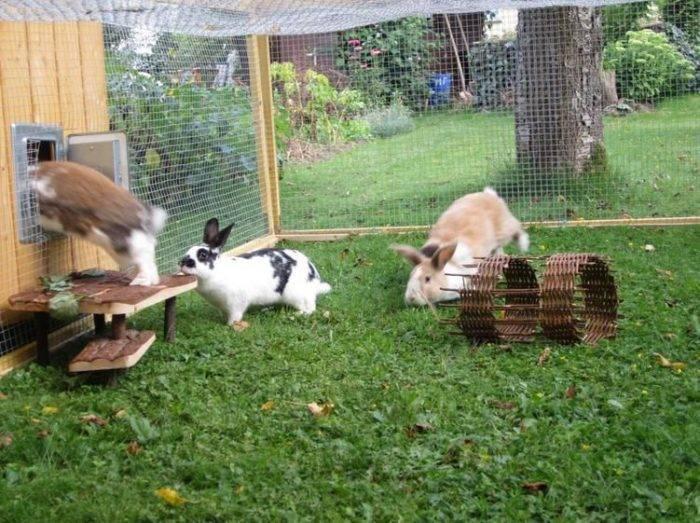 Основные правила содержания кролей   кролиководство - все о кроликах
