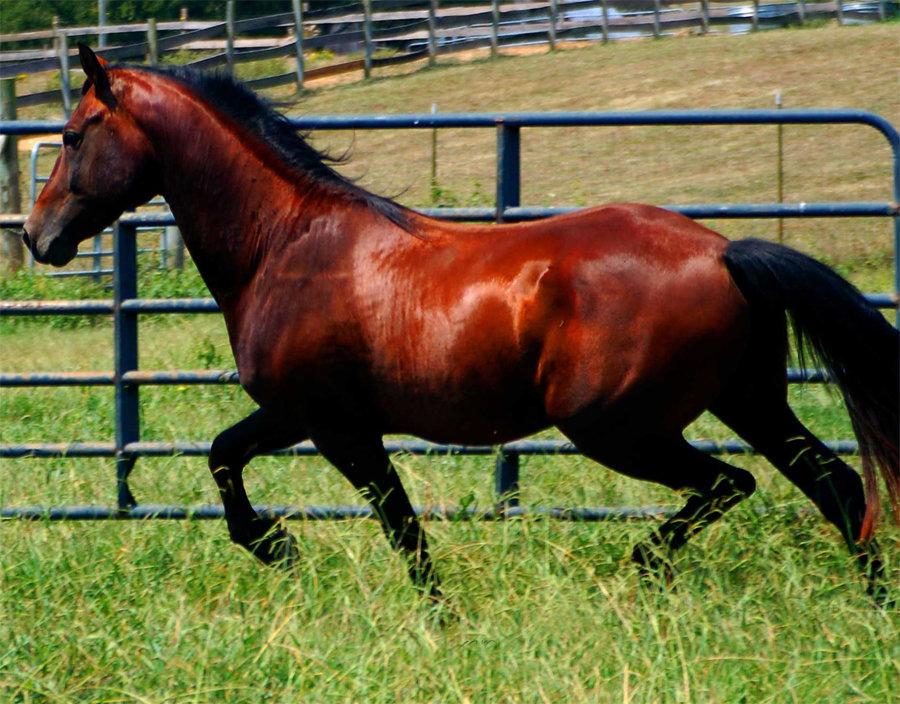 Масти лошадей с описанием и фото | конный портал