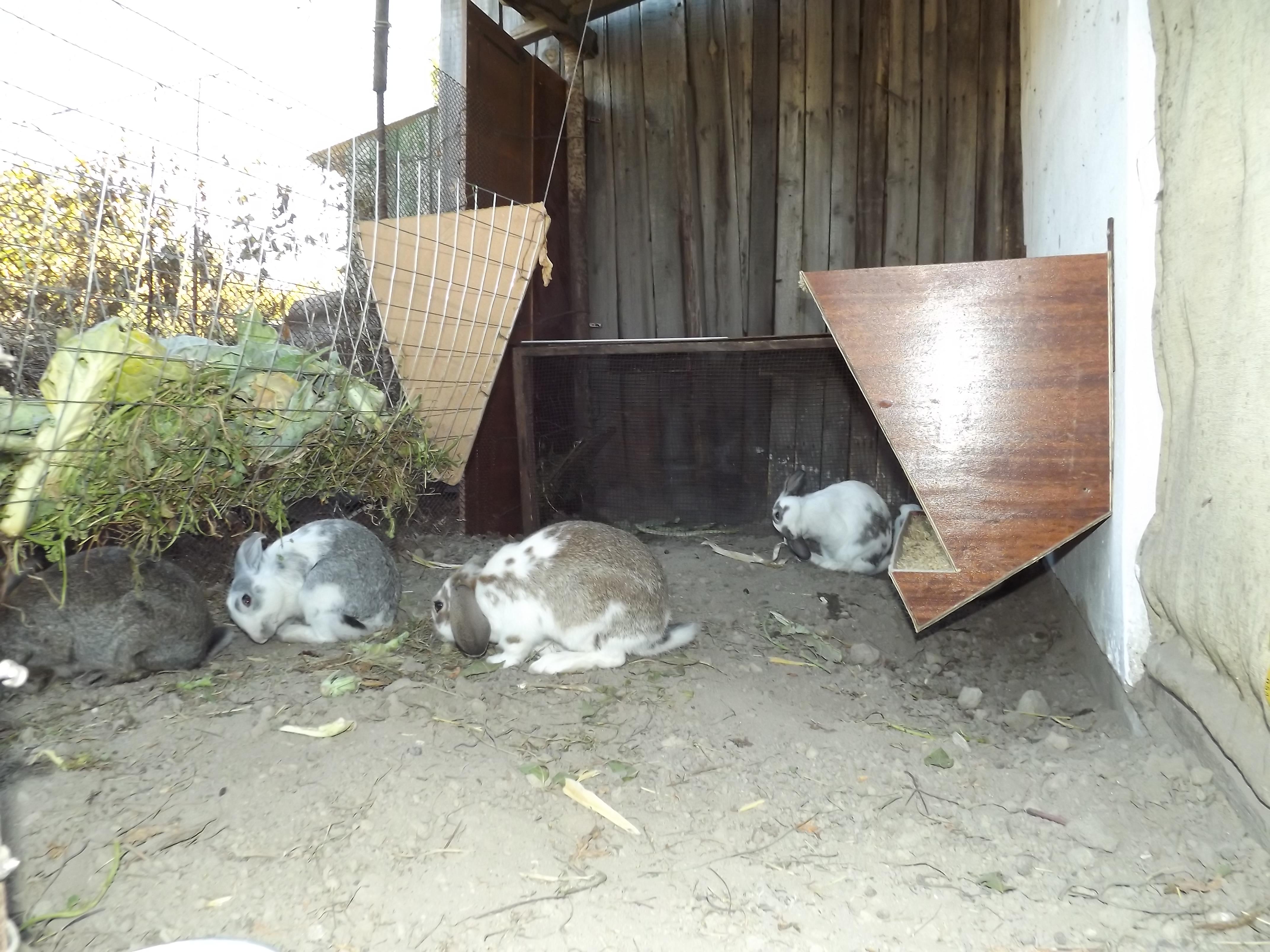 Содержание кроликов в вольерах: плюсы и минусы такого метода
