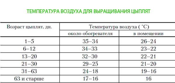 Расход корма для бройлеров: таблица и нормы кормления