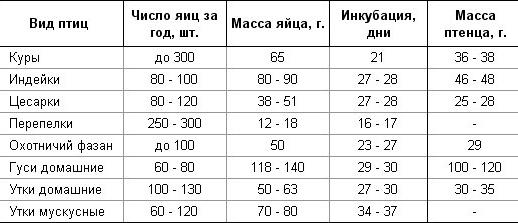 Вывод цесарок в инкубаторе: таблица и режим инкубации