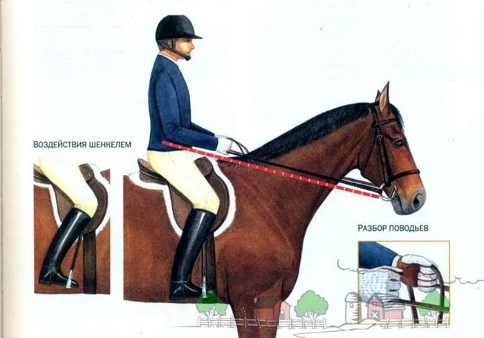 Как управлять лошадью, седлать ее: правила верховой езды