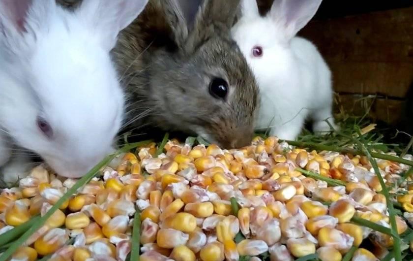 Можно ли давать кроликам помидоры и помидорную ботву: как кормить и в каких количествах - гид по огороду