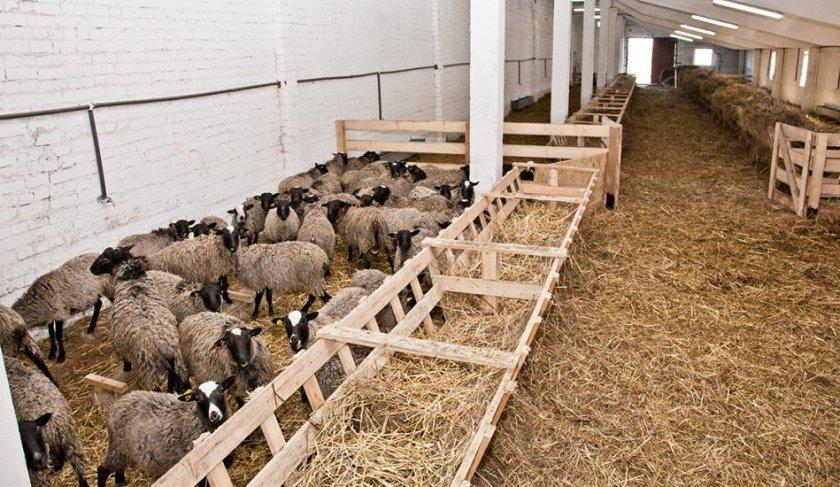Как построить сарай (стойло, хлев) для быков своими руками