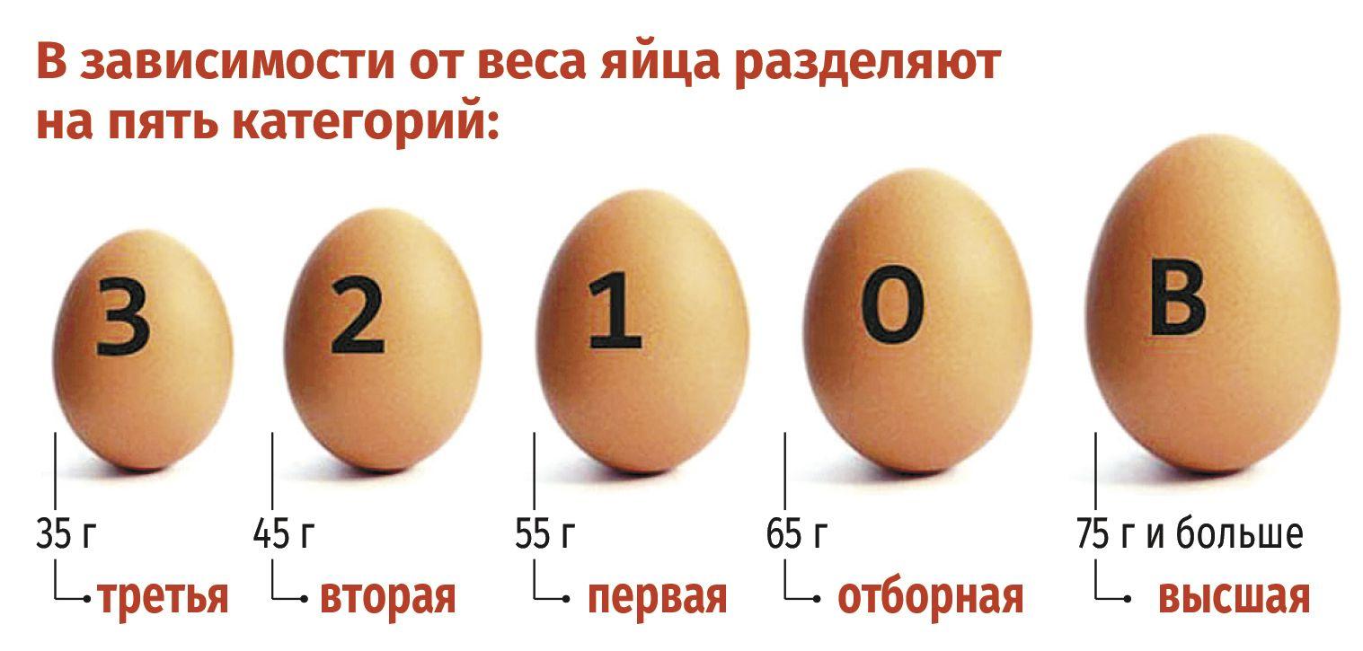 Сколько яиц несет курица несушка в месяц - подробная информация!
