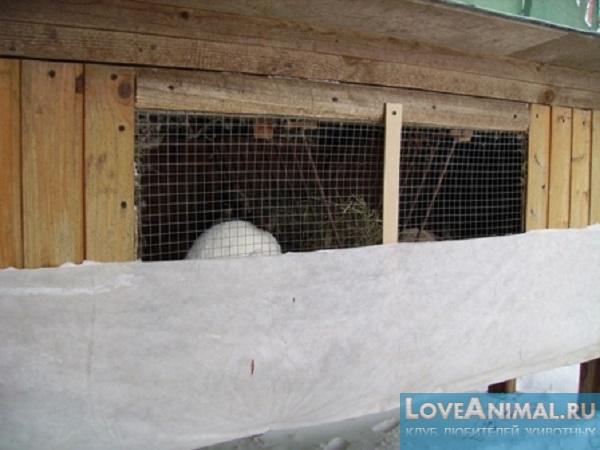 Зимний окрол кроликов при уличном содержании: правила утепления клеток