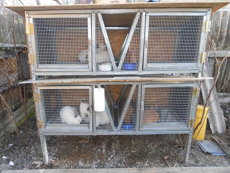 Кролики: разведение и содержание в домашних условиях — cельхозпортал