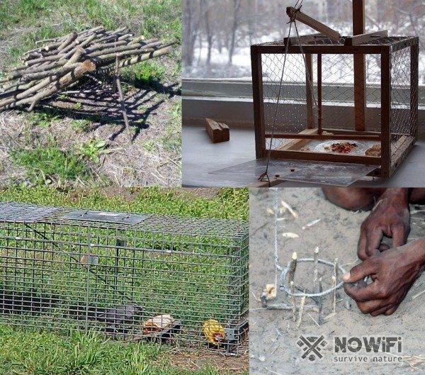 Как поймать живого фазана  — варианты ловушек и рекомендации
