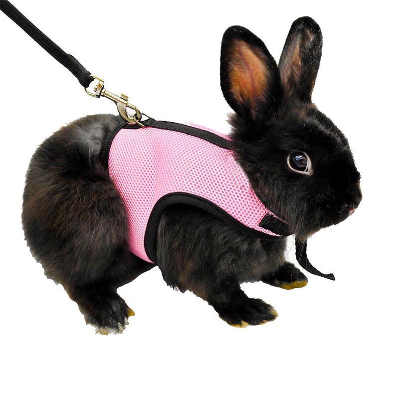 Виды шлеек для кроликов, как правильно надеть их на питомца и как приучить кролика к шлейке