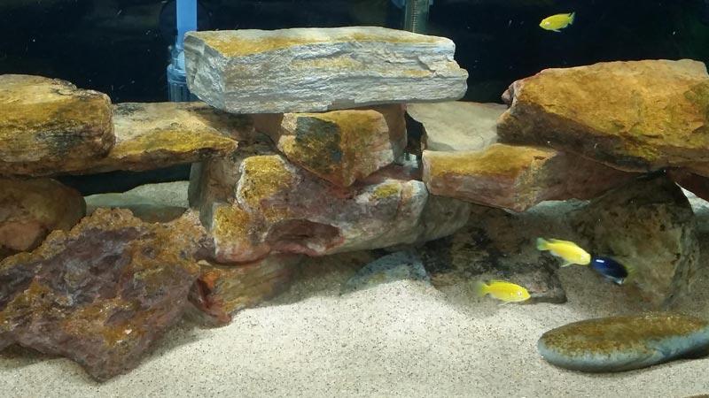 Бурые водоросли в аквариуме