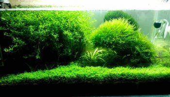 Как избавиться от водорослей в аквариуме