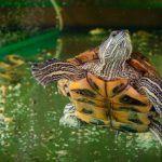 Плавает в водичке