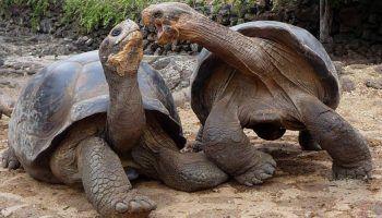 Как определить пол черепахи