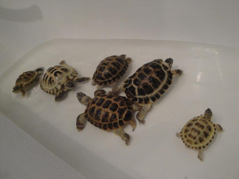 Плавают в ванной