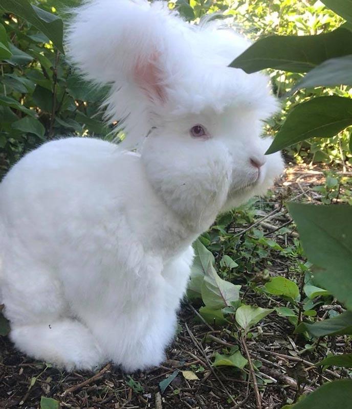 Кроль после стрижки