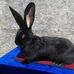 Кролик на подставке