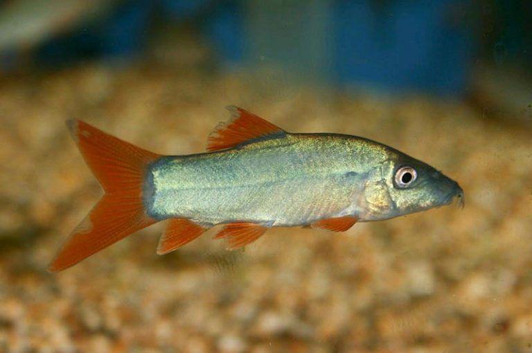 клип прудовые рыбы фото и названия черноземья руке, называемое хиромантия