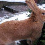 Кроль ранней весной