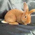 Кролик на фотосессии