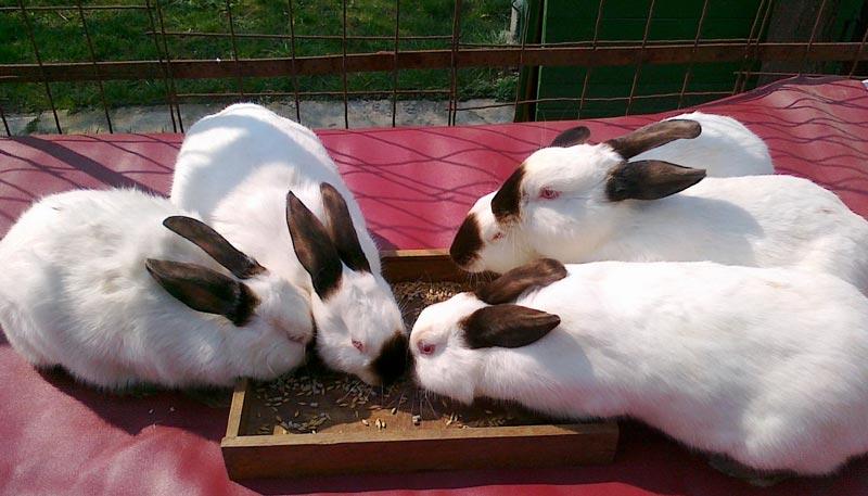 Кроли едят