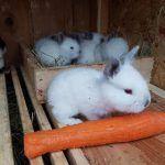 Ероль и морковь