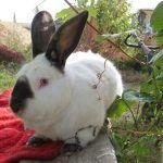 Кроль в саду