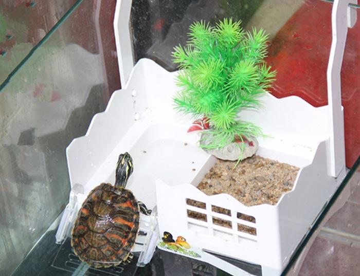 Черепаха и песок