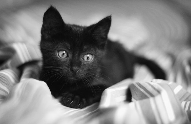 Котенок на простынке