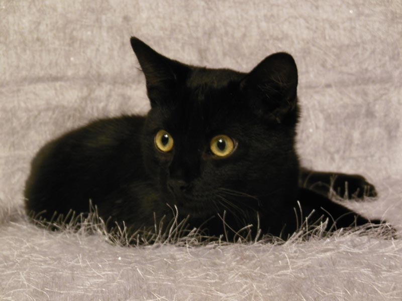 Маленький черный котенок