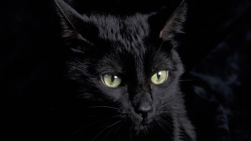 Умная кошка