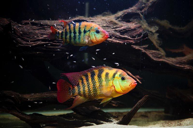 Две рыбешки