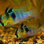 Полупрозрачные рыбки