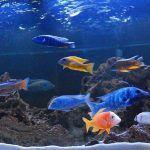Большой аквариум с разными рыбами
