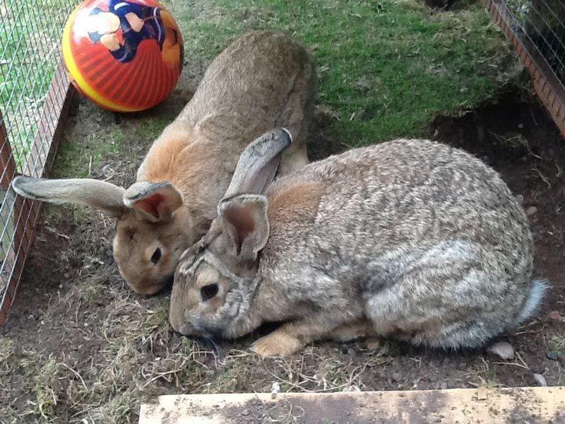Континентальный кроль