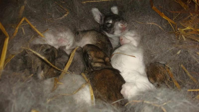 Самка с детьми в гнезде