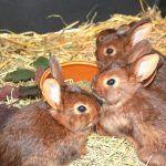 Малыши-кролики