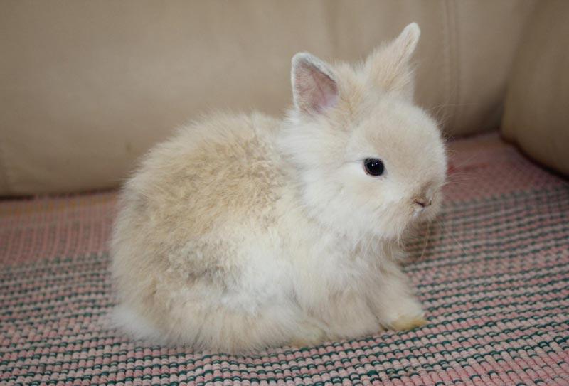 Маленький кроль