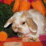 Кролик и хвоя