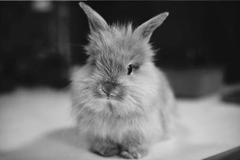 Кролик наблюдает
