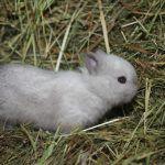 Совсем маленький кролик
